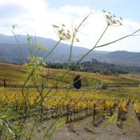 Antica Drogheria Francioni is located in the beautiful Casentino valley.