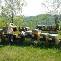 Cocconato, one of the locations where the hives are placed.