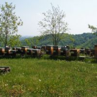 Another view of the hives at Cocconato.