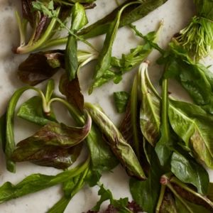 Florentine Mixed Winter Greens Salad from the AUTENTICO cookbook