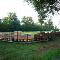 Another view of the hives at Lombardore.