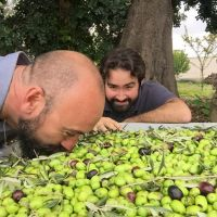 Rolando smelling the freshly harvested olives.