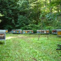 Hives at Viu.